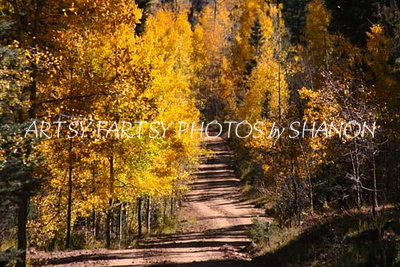 Road thru the Aspens
