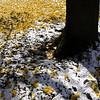 First snow and fall leaves, Gates, N.Y.