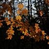 Fall colors in Seneca Park, Rochester, N.Y.