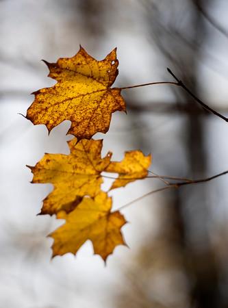 2014  Fall foliage