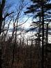 <center>Birch Forests    <br><br>Lake Placid, New York</center>