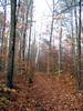 <center>Leaves Mask the Trail    <br><br>Lake Placid, New York</center>