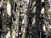<center>Woodpecker    <br><br>Lake Placid, New York</center>