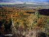 <center>Color in the Valley    <br><br>Holyoke, Massachusetts</center>