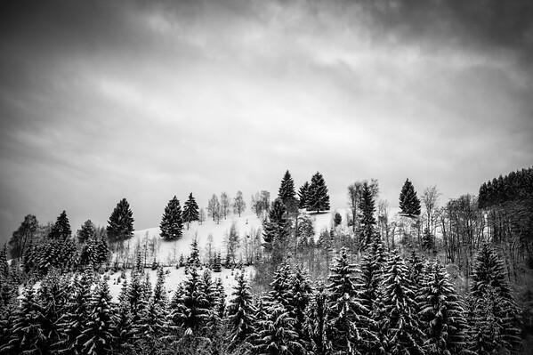 Black Forrest Winter