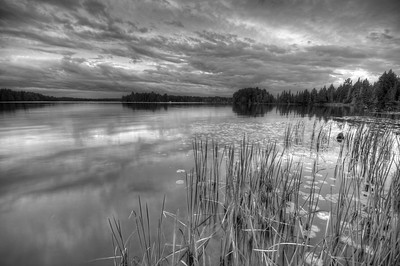 Cattails along the shore of Big Lake, Wisconsin. Converted to black and white.