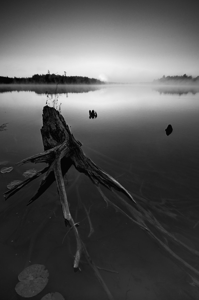 Partially submerged stump in Big Lake, Wisconsin. Converted to black and white.