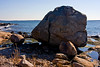 <center>Westerly Granite  <br><br>This large boulder of Westerly Granite is perched on the shore at Bluff Point.  <br><br>Bluff Point State Park<br>Groton, Connecticut</center>