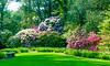 Rhododendron at Sundial Garden