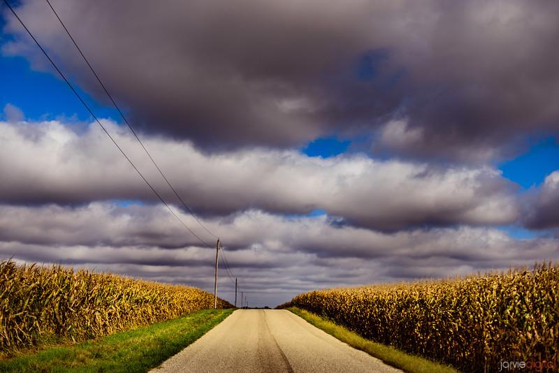 Indiana Corn Fields