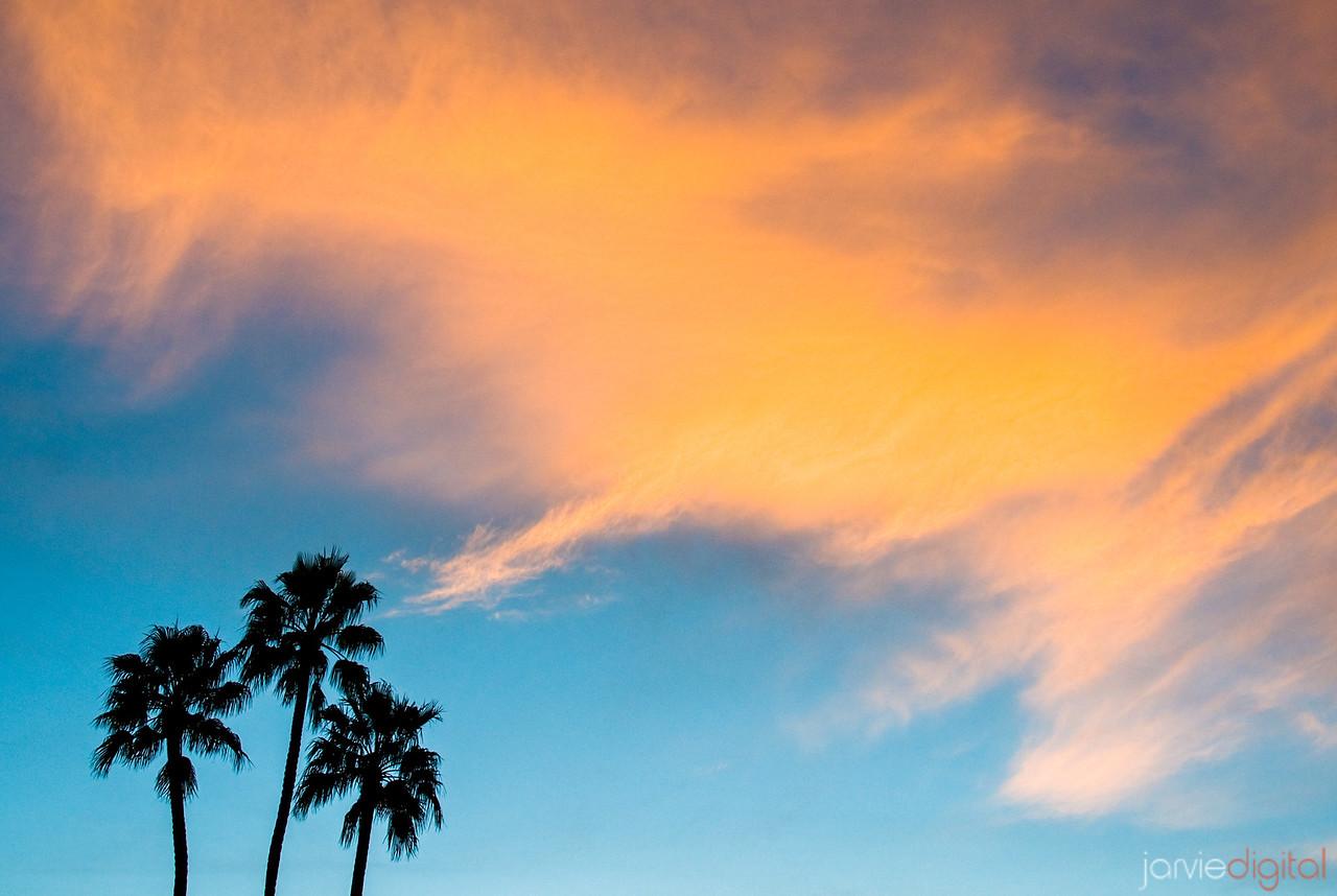 Palm Trees - Horizontal