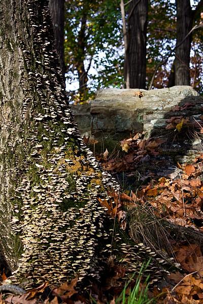 <center>Shrooms!  <br><br>Blackstone Valley Bike Path<br>Cumberland, Rhode Island</center>