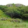 Fairy Glen Uig Skye - 09
