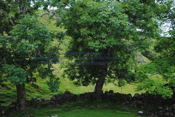 Fairy Glen Uig Skye - 41