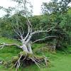 Fairy Glen Uig Skye - 42