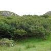 Fairy Glen Uig Skye - 10