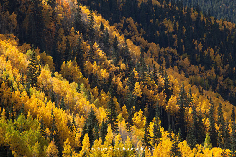Fall Colors | Near Ouray Colorado | 2011 | SWCO # 005