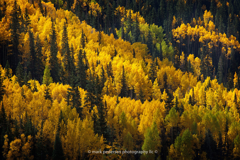 Fall Colors | Near Ouray Colorado | 2011 | 020