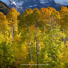 San Miguel range  with aspens | near Ophir Colorado | Fall 2012 | SWCO # 013