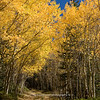 Fall 2011 | Aspens and path | Colorado | SWCO # 019