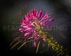 Flower.  9667