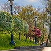 A sidewalk in Green Tree (in/near Pittsburgh, PA).  Beautiful trees line the sidewalk in this borough.  This portrait photo offers a classic look of blooming trees with classic street lamps.