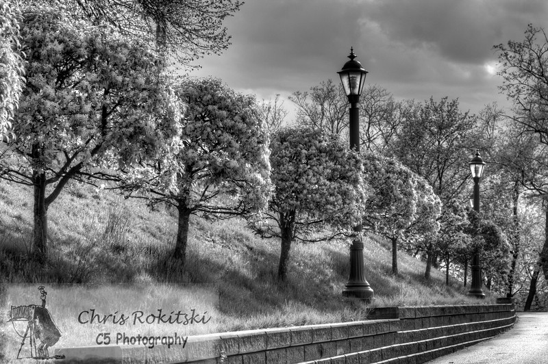 A sidewalk in Green Tree (in/near Pittsburgh, PA).  Beautiful trees line the sidewalk in this borough.  I took this photo during the spring to capture the full blooms on each tree.  The classic lamp posts along the wall provides a simple and elegant look that I have enjoyed around the area.  This photograph is the same as the color version, but has been converted to black and white.