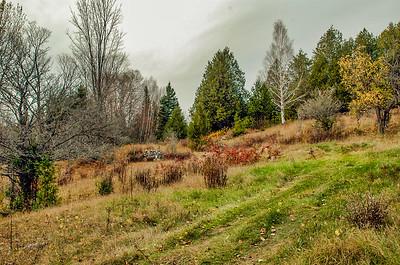 Fall Meadow, Minden Hills, Ontario