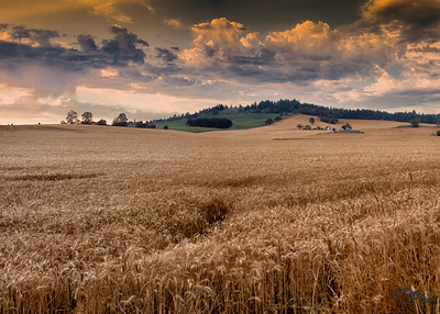 Country Fields
