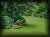 Weyerhauser Mossy Pond