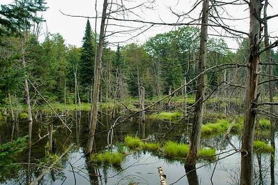 Beaver Pond, Minden Hills, Ontario