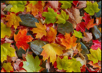 Autumn Palette of ColorsCuyahoga Valley National Park, Ohio