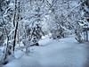 <center>North and Middle Sugarloaf - 15 January 2011<br>Crawford Notch, NH<br><br>Winter Wonderland  <br><br>The trail lead through a wonderland of snow.  </center>