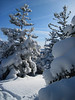 <center>North and Middle Sugarloaf - 15 January 2011<br>Crawford Notch, NH<br><br>Snow Covered Evergreens  <br><br>Deep snow covered the trees on the summit of North Sugarloaf.  </center>
