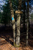 <center>North South Trail - Section One - 19 March 2011<br>AMC - Narragansett Chapter<br><br>Wooden Trail Sign  <br><br>This trail sign, well above eye level, points the way into the park.  </center>