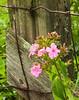 Captive Flower