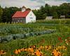 Muster Field Farm