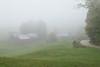 Fog at Jenne Farm