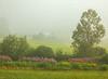Cabot Farm in Fog