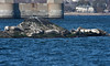<center>Sun Bathing  <br>Save the Bay Seal Watch - 18 February 2012<br>SNE Spur of the Moment Meetup Group<br>Newport, Rhode Island</center>