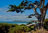 Ocean View and Cypress from Scenic Drive, Carmel, California