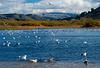 Lagoon at Carmel.  Carmel, CA