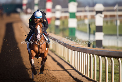 Good Magic works at Keeneland on 4.21.2018 in preparation for the Kentucky Derby.