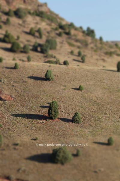 Train-set-Trees | Red Rocks Park | Morrison Colorado