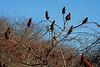 <center>Tall Bushes<br><br>Sachuest Point National Wildlife Refuge<br>Middletown, Rhode Island<center>