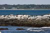 <center>Cormorants on the Rocks <br><br>Sachuest Point National Wildlife Refuge<br>Middletown, RI</center>