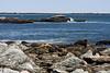 <center>Rocky Coast <br><br>Sachuest Point National Wildlife Refuge<br>Middletown, RI</center>