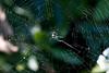 <center>Spinning a Web <br><br>Sachuest Point National Wildlife Refuge<br>Middletown, RI</center>