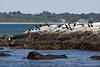 <center>Cormorants <br><br>Sachuest Point National Wildlife Refuge<br>Middletown, RI</center>