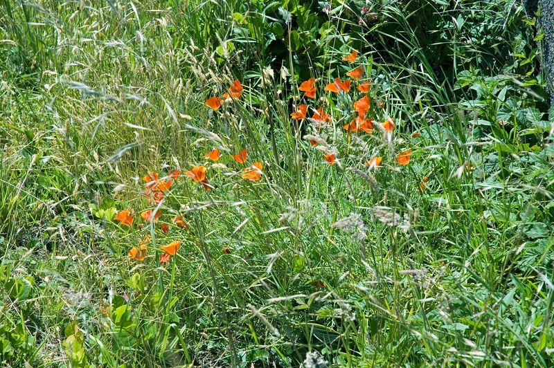 ND70_2005-07-13DSC_1660-OrangeFlowers-2